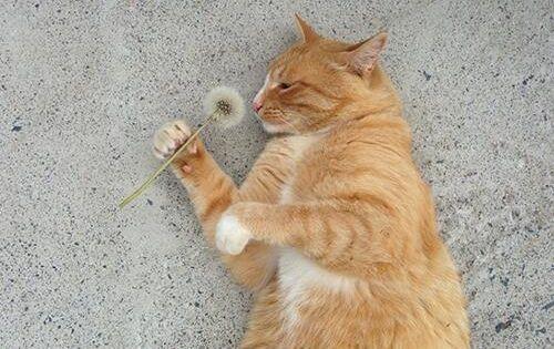 Kitty cat & dandelion.
