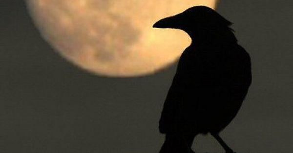 Full moon raven and photos on pinterest