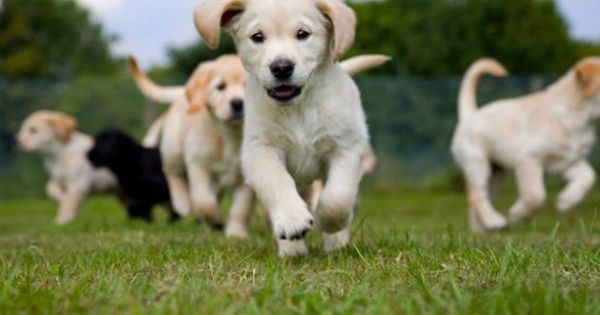 Group Classes Puppies National Puppy Day Dogs