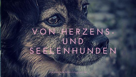 Von Herzens Und Seelenhunden Mit Bildern Hunde Malteser Hund