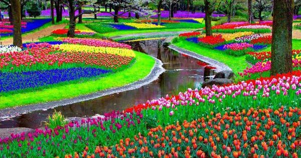 Keukenhof Garden, Amsterdam Beautiful! This very much reminds me of what I