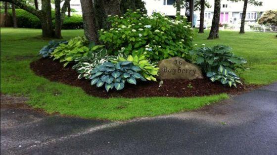 Treetside Hostas Gorgeous Love The Rock With Address