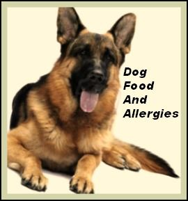 Natural Balance Dog Food And Allergies The Most Common Problem