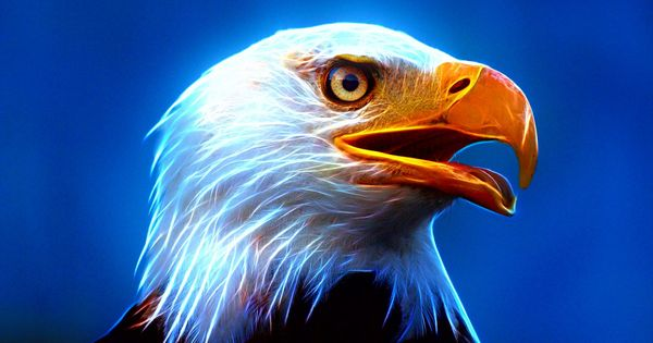 Bird Symbolism Meanings Full Resource Animal Spirit Guides Omens Spirit Animals Totems Reality Files Eagle Wallpaper Animal Spirit Guides Spirit Animal Eagle full hd wallpaper download