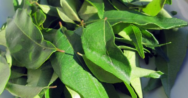 ... Curry Leaves Add A Touch Of India | Curry Leaves, Curries and Leaves
