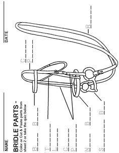 English Bridle Parts Worksheet Horse Lessons Horse Anatomy Horses