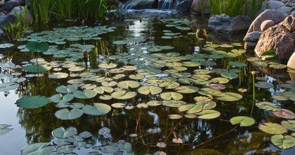 Gentle slope.... | garden & pond | Pinterest |Gentle Waterfall Pond