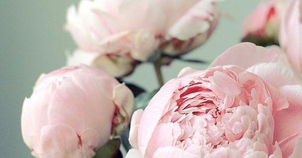 my fav flower