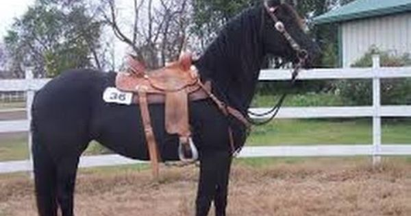 Horse For Sale Craigslist Horse For Sale In Texas Horse For Sale In Ga Horses For Sale Horses Quarter Horse