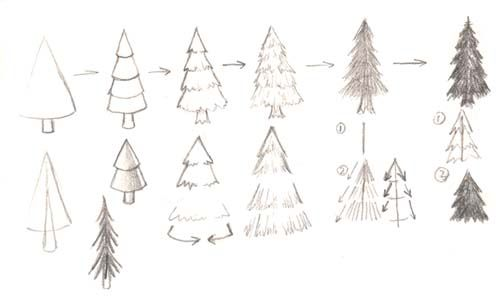 Manga Tutorials Cools Step By Step Nature Drawings Pine Tree Drawing Tree Drawing Tree Sketches