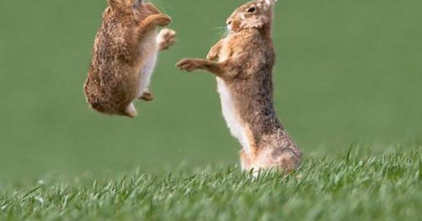 now if all bunnies were kung fu fighting they wouldn't have called