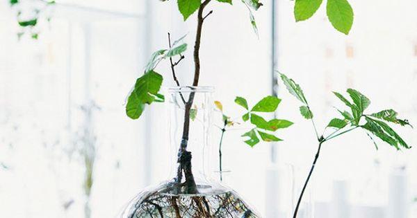 plantes dans un vase avec de l eau juif errant plantes enracinement et plantes. Black Bedroom Furniture Sets. Home Design Ideas