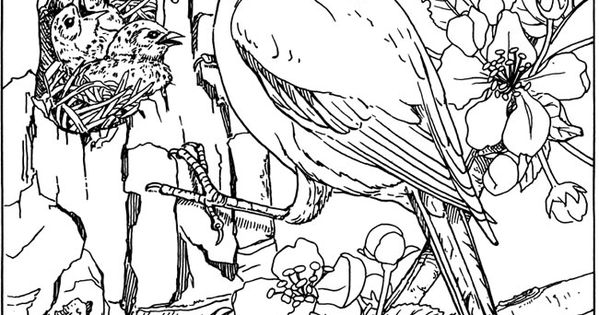 Bird Nature Wildlife Coloring pages