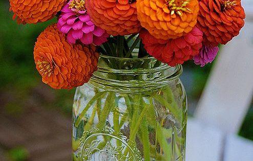 Pin By Alia Maisarah On Bunga Beautiful Flowers Zinnias Pretty Flowers