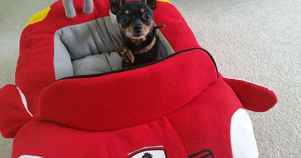 Small Dog Red Bed Ferrari Dog Bed Dog Nest Bed Chihuahua Etsy Dog Bed Car Dog Bed Red Bedding