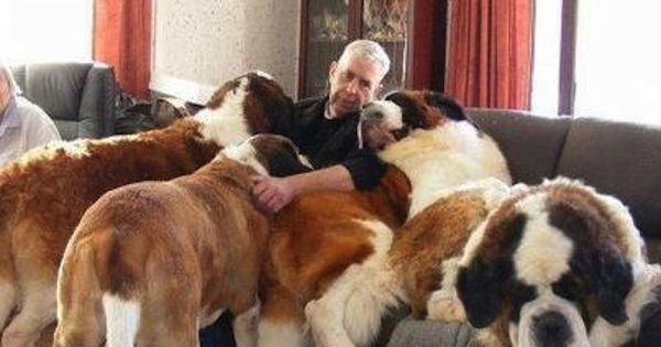 dog couch | Big Dogs | Pinterest | Dog couch, Dog and Animal