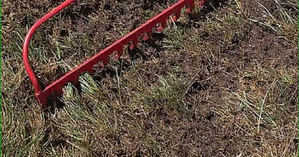how to get rid of crabgrass organically