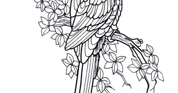 Dessin tr s r aliste d un perroquet sur une branche - Dessiner un perroquet ...
