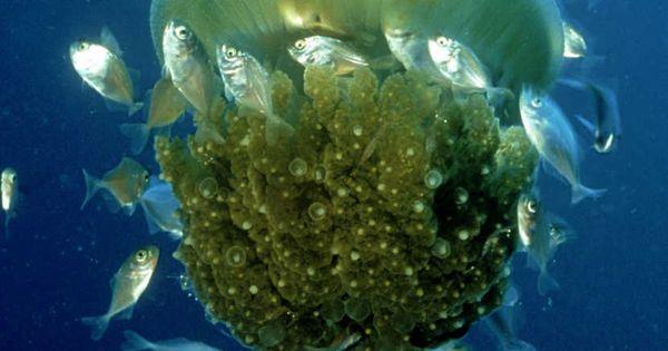 How amazing sea creatures are!!