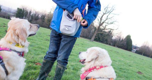Doog Walkie Bag Review Dog Walking Dog Walking Bag Best Dog Training