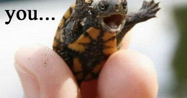 I love baby turtle humor.