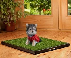 Posh Puppy Boutique Indoor Dog Potty Dog Potty Training Your Dog