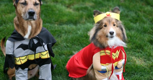 Top 10 Halloween Costumes For Pets In 2012 Best Dog Costumes