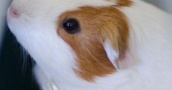 Pin On Urgent Animals