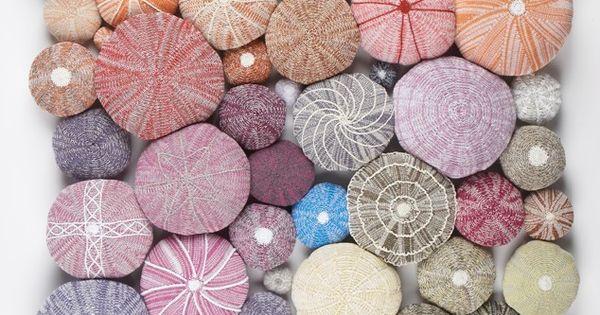 #seashells SeaUrchins