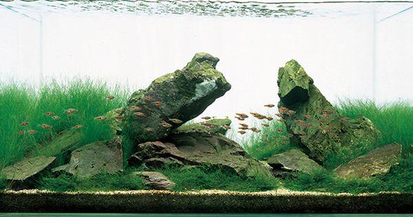 Aquarium rocks, Planted aquarium and Aquarium on Pinterest