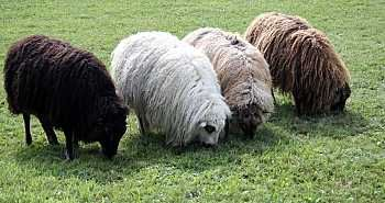 Image result for Animal Fiber Market