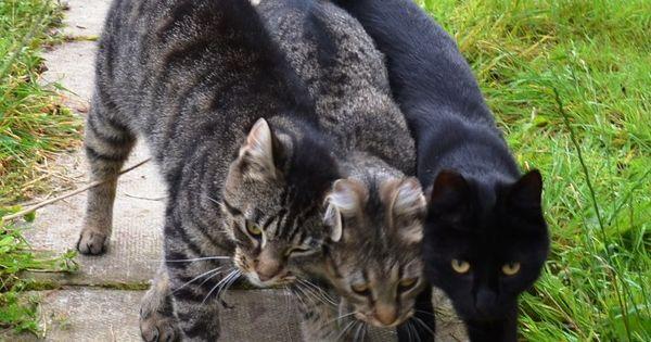 Photo Via Cats Protection Bridgend Adoption Centre Cats Pets Best Friends For Life