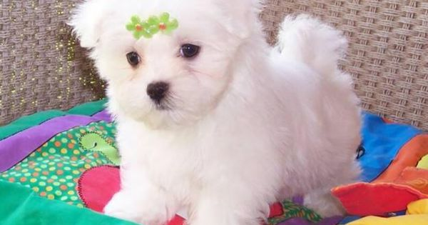 Puppies for Free No Pay Avoid scams by dealing locally