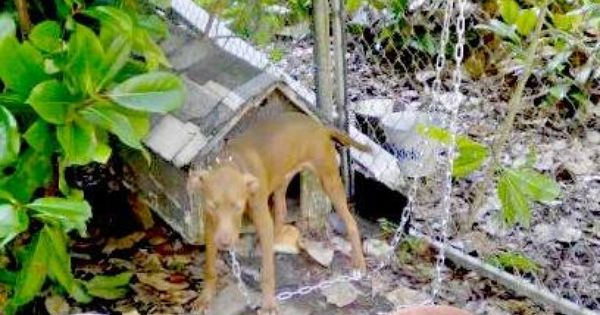 Spartunburg Sc Craigslist Dog Please Help There Is No Email To Reply Just A Phone Number This Poor Dog Looks So Neglect Poor Dog Animal Abuse Dog People