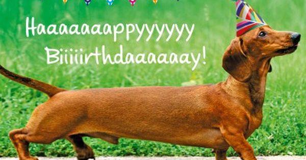 Dackel Hund Happy Birthday Geburtstags Postkarte Grusskarte Dachshund Birthday Happy Birthday Dachshund Happy Birthday Funny Ecards