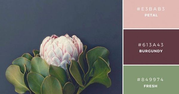 Build Your Brand: 20 Unique and Memorable Color Palettes to Inspire You  팔레트 ...