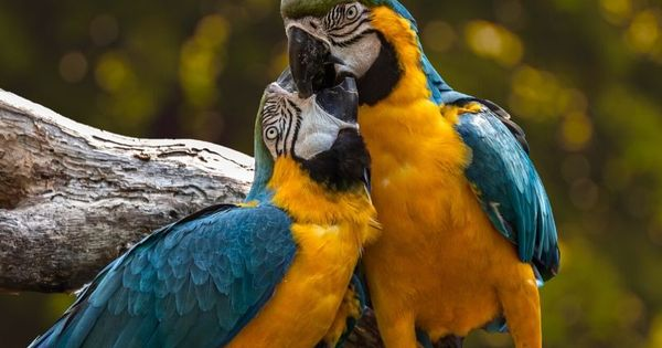 Get 50 Off With Parrot Essentials Discount Code Coupons Pet Lovers In 2020 Parrot Colorful Parrots Pet Birds