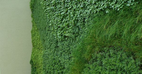 indoor wall garden - Google Search