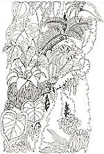 jan brett rainforest coloring pages or