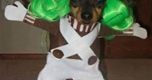 Oompa Loompa Dog Meme Poopbuddy Dog Is Funny