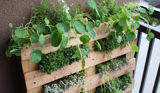 Small Space Garden Idea, pallet garden
