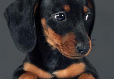 Doxies Now That I Got Your Attention I Am Going To Point