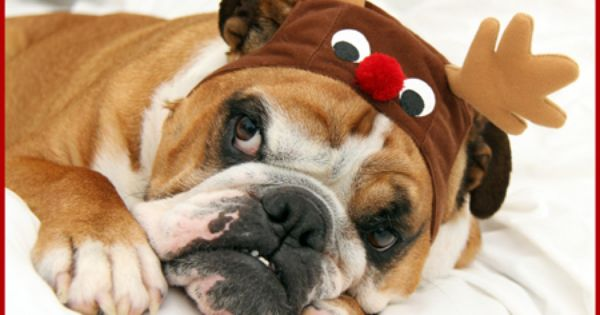 Toys For Rescue Bullies Toy Drive Click Pic Or Link Http