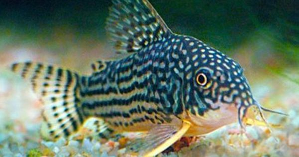 Tropical Fish Online Store