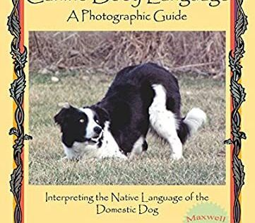 Free Ebook Canine Body Language A Photographic Guide Interpreting The Native Language Of The Dome Got Books Canine Free Reading
