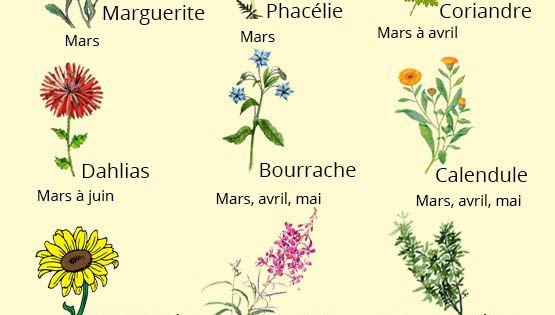 Calendrier de plantation des fleurs flowers pinterest for Plantation de fleurs