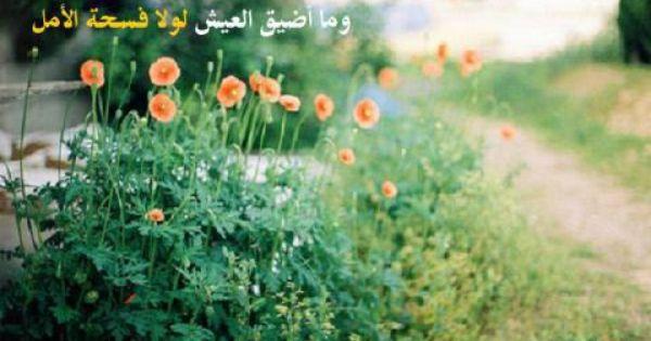 صور كلمات معبرة جميلة Flowers Nature Flowers Peach Blossoms