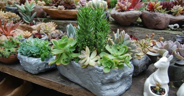 Blument pfe aus stein zimmerpflanzen ideen for Zimmerpflanzen ideen