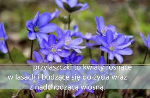 Prezentacja Zwiastuny Wiosny Youtube Education Youtube Film