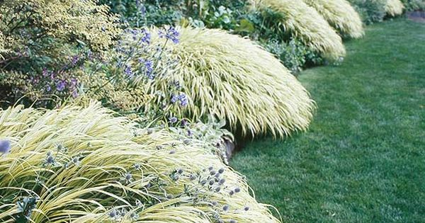 17 top ornamental grasses gardens spring and perennials for Low mounding ornamental grasses